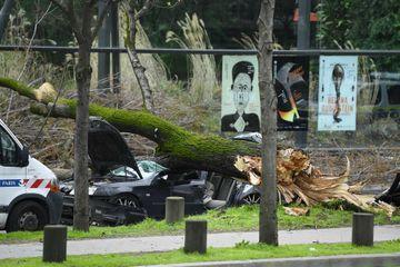 Rafales de vent : un automobiliste tué par une chute d'arbre à Paris