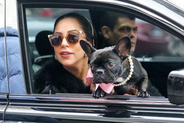 Lady Gaga retrouve ses deux chiens volés