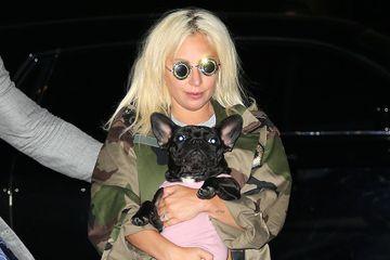 Le promeneur de chiens de Lady Gaga agressé par balles, deux bouledogues volés