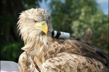 Dans l'oeil d'un aigle