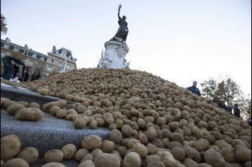 50t de patates pour une grosse dose de colère