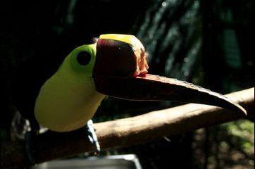 Au Costa Rica, un sanctuaire pour les animaux maltraités