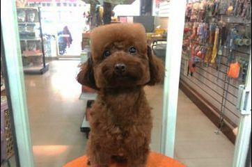 Les chiens ont la tête au carré