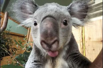 Les selfies des animaux du zoo d'Edimbourg