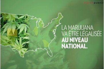 Le boom du cannabis aux Etats-Unis
