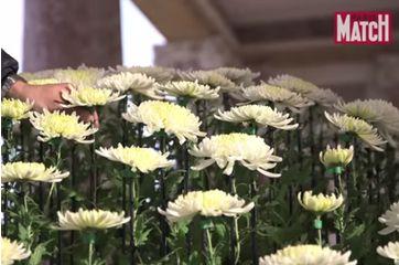Le chrysanthème, une fleur impériale à Versailles