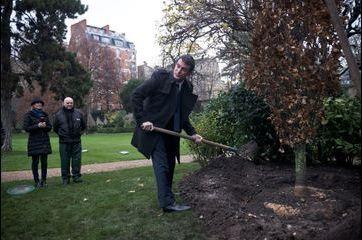 Pelle en main, Manuel Valls plante un arbre à Matignon