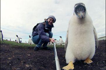 Selfie avec les manchots