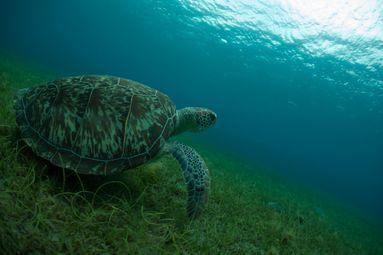mission de sauvegarde du milieu marin dans le parc national de Guadeloupe