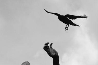 « Je suis un corbeau »
