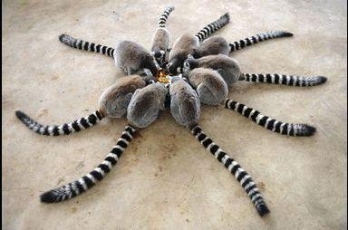 Araignée géante?