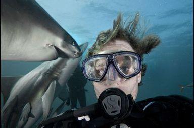 Selfie chez les requins
