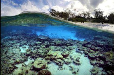La grande barrière de corail est en danger !