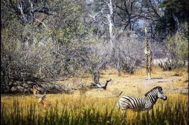 Botswana, l'eden sauvage