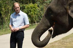Le prince prend la défense des éléphants