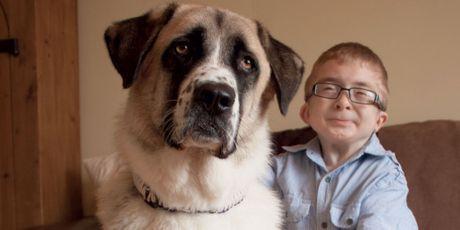 Haatchi et Owen, quand la présence d'un chien sauve