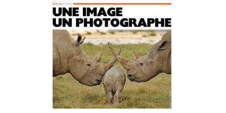 L'arche des rhinocéros, par Patrick Kientz