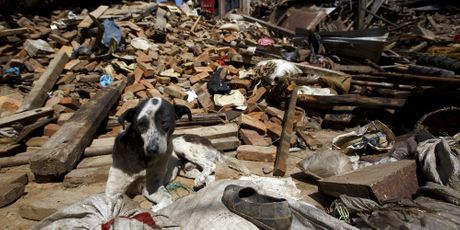 Les animaux au milieu du désastre