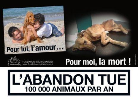 Affiche fondation bardot-