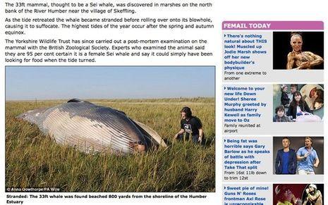 Baleine-