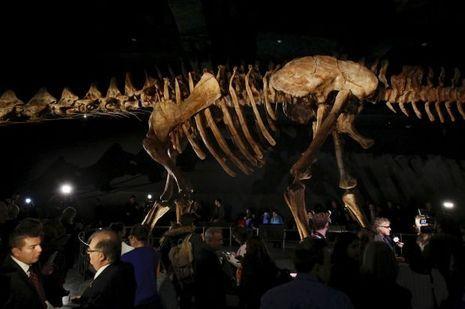 La cage throracique du titanosaure pourrait contenir un gros Hummer.
