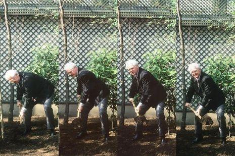 Le 12 février 1998, Lionel Jospin plante un orme dans le parc de Matignon.