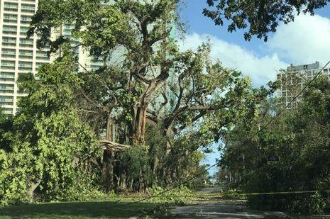 Miami après Irma