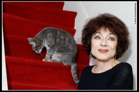ROSE Portrait Judith Magre (chat)_ photo libre de droits (c)Olivier Borde_BestImage-
