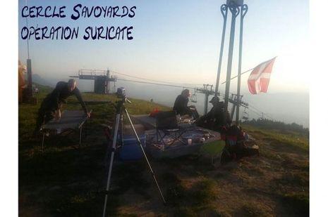 Savoie QG Suricate
