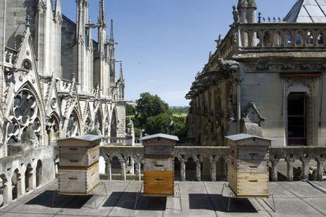 Le miel de Notre-Dame.
