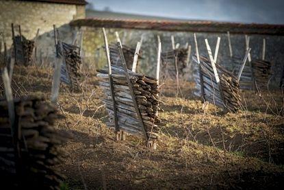 A l'intérieur du Clos Saint-Jacques, les échalas qui serviront à soutenir les précieux pieds de vigne.