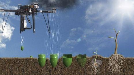 300 capsules de graines disséminée au rythme d'une toutes les six secondes (DR).