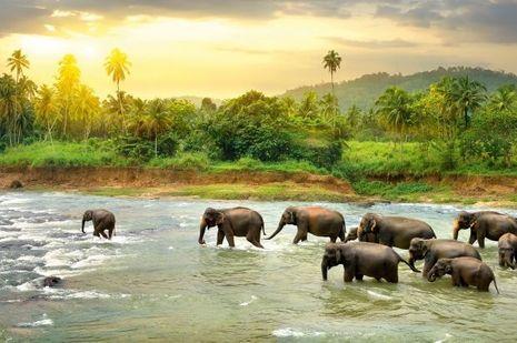 Au Sri Lanka.