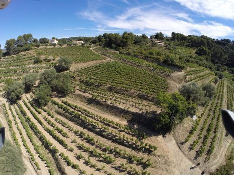 Un vignoble situé au coeur de l'Appellation Bando