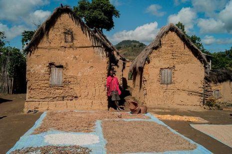 Un village de cueilleurs, à 100 kilomètres de Tananarive
