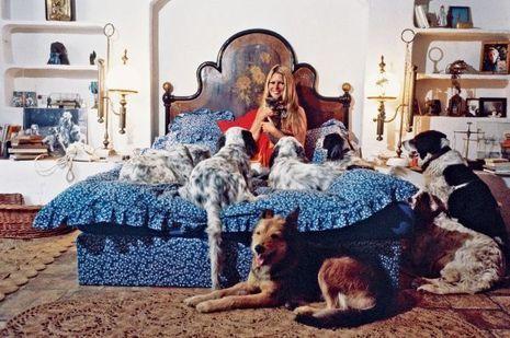 Brigitte bardot je veux vaincre l indiff rence vis vis for Chambre correctionnelle paris