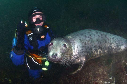 Amitié sous-marine entre un phoque et un plongeur