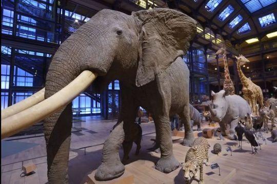 La Grande Galerie de l'Evolution mise en beauté et en lumière