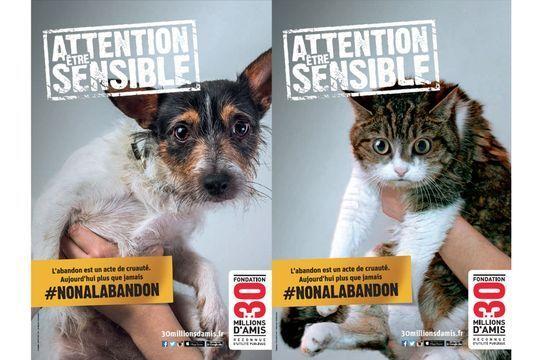 Les initiatives contre l'abandon des animaux