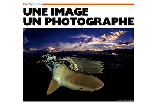 Dans les eaux polynésiennes, par Vincent Truchet