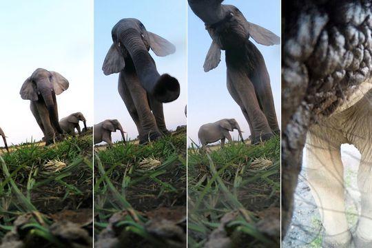 L'éléphant qui voulait voir une GoPro de près