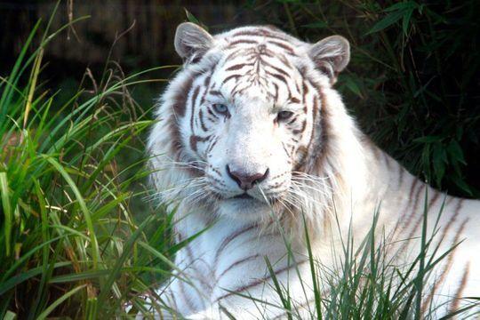 Zoo d'Amnéville, le rêve d'un passionné