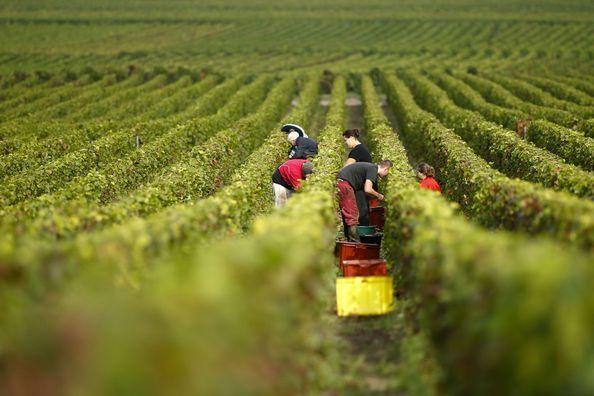 Comment des Français imaginent le vin du futur