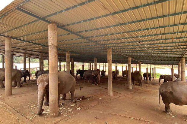 Les éléphants dans le Elephant Rescue Park.