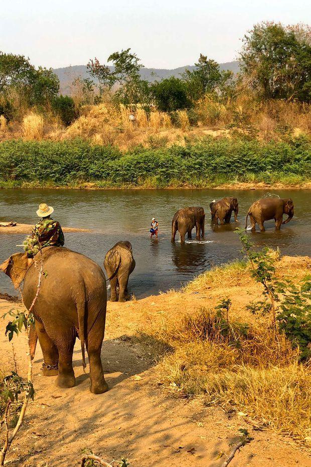 Les éléphants du Elephant Rescue Park.