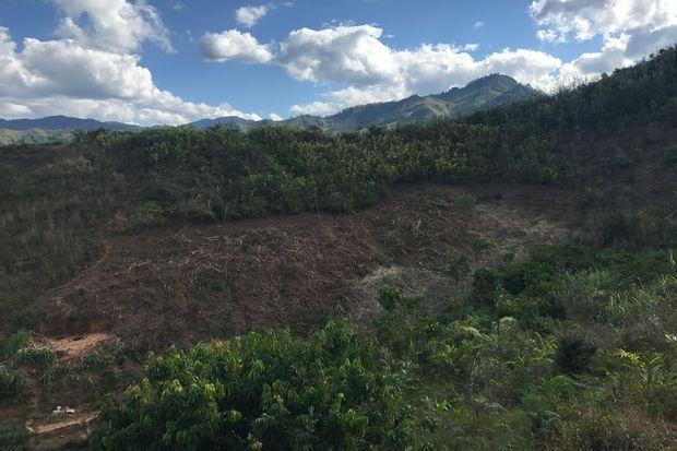 Des morceaux de forêts détruits par les agriculteurs dans le Ranomafana National Park, afin de faire pousser du riz.