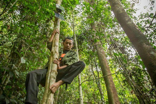 Le système a déjà été testé à Bornéo.