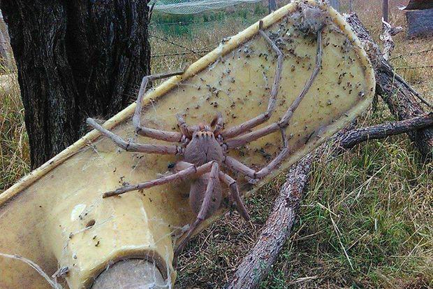 Une autre photo de l'araignée