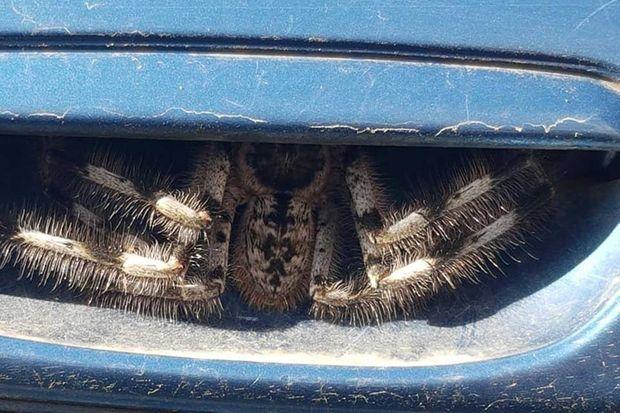 L'araignée cachée dans la portière.