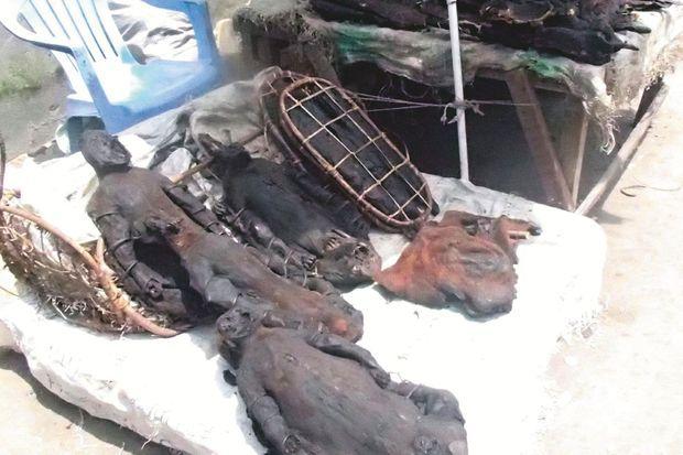 Gorilles et chimpanzés boucanés vendus sur un marché à viande de Kinshasa.